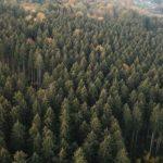 gestion forestière en belgique